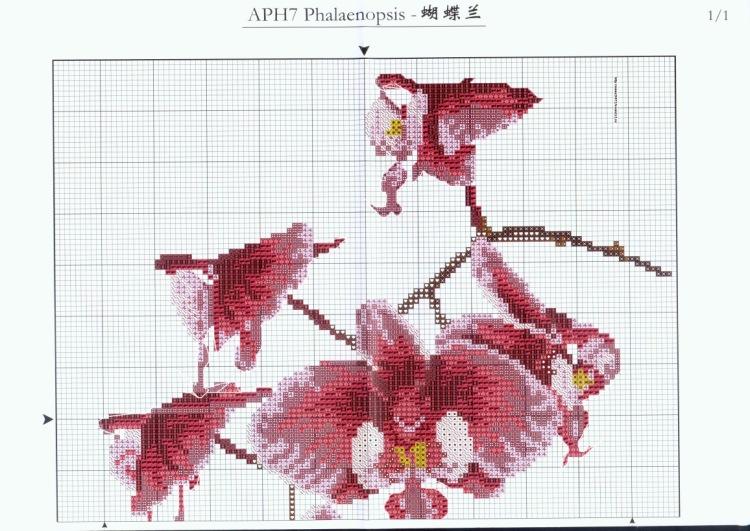 Вышивки схемы с орхидеями 95