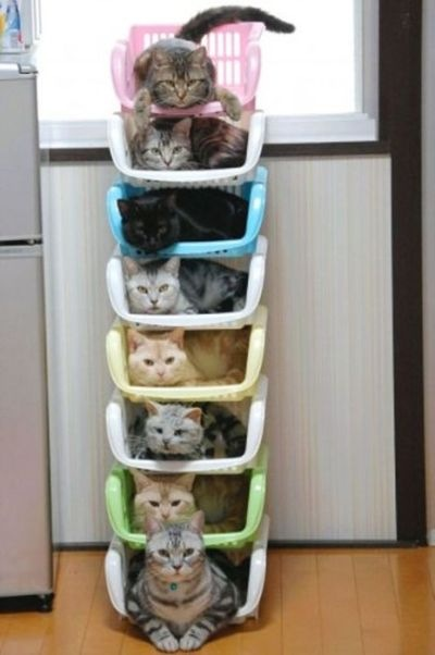 Фото идеи для котят
