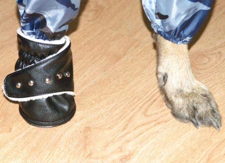 Из чего сделать обувь для собаки своими руками видео