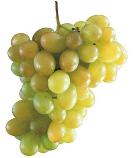виноград тавриз описание сорта фото