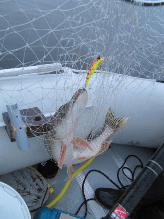 оптовики для рыбалки